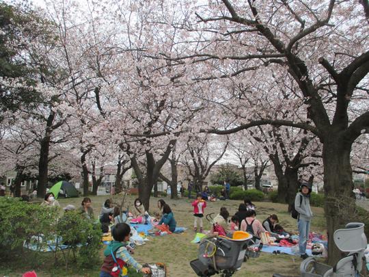 川崎市大師公園のお花見