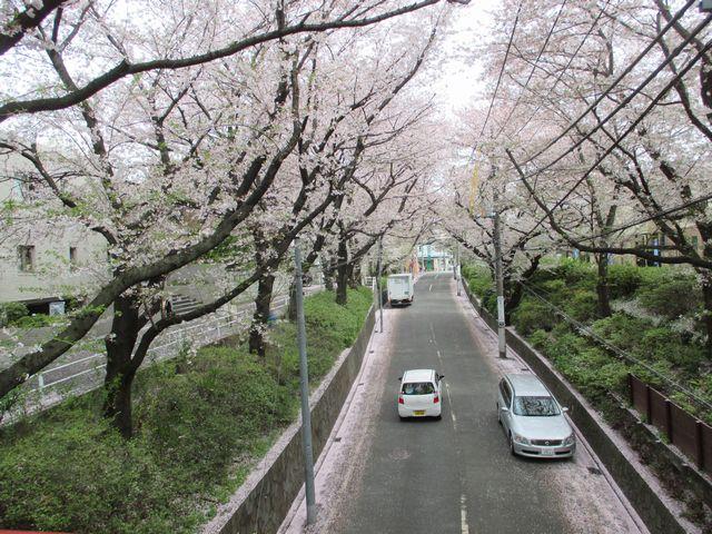 桜坂(大田区)
