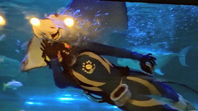 水中ショー