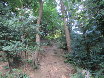 高輪森の公園、クサッパら状態