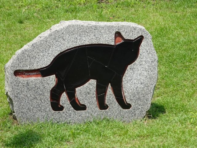 一部が欠損した黒猫